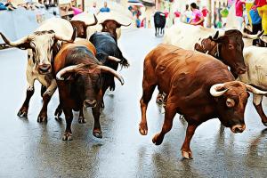 hva er bull run